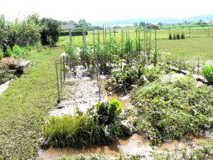 zahrada po ustupu povodne