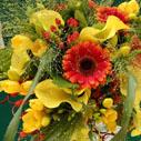 letni flora nahled