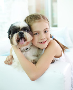 pes pro rodinu Shih-tzu