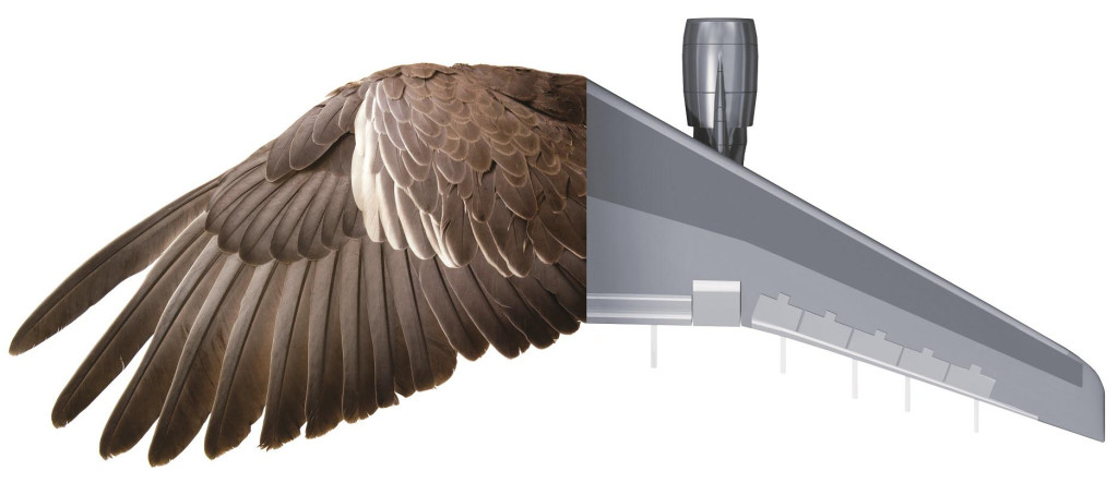 kridlo ptaka a letadla
