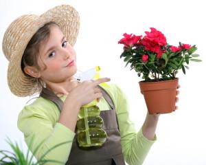 roseni rostlin