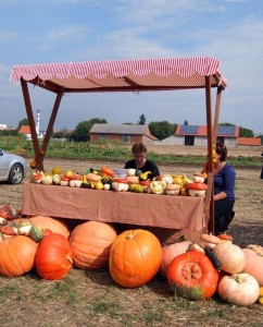farmarske trhy slavnosti cibule dyne
