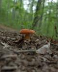 houbova sezona
