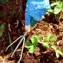 jahody plevel nahled