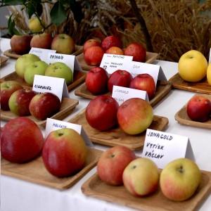 vystava jablek