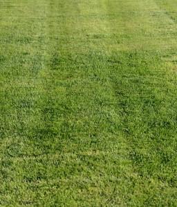 poseceny travnik