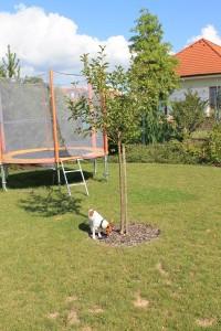 relaxacni zahrada