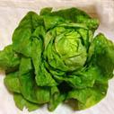 hlavkovy salat nahled