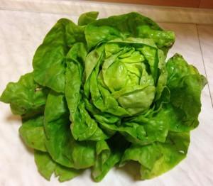 podzimni hlavkovy salat