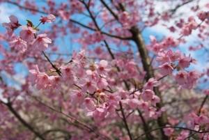 kvetouci strom