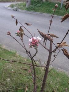 kvety v prosinci