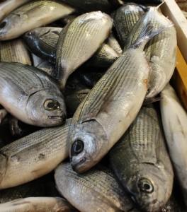 cerstve ryby