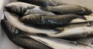konzumace ryby