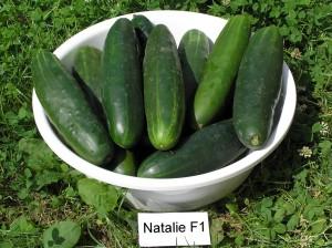 NATALIE salatovka