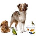 for pets 2014 nahled