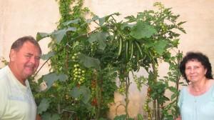 mini zahradka