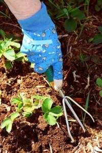 brambory plevel