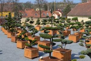 tvarovane stromy