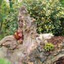 nizkoudrzbova zahrada nahled