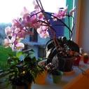 orchidej kvete porad nahled