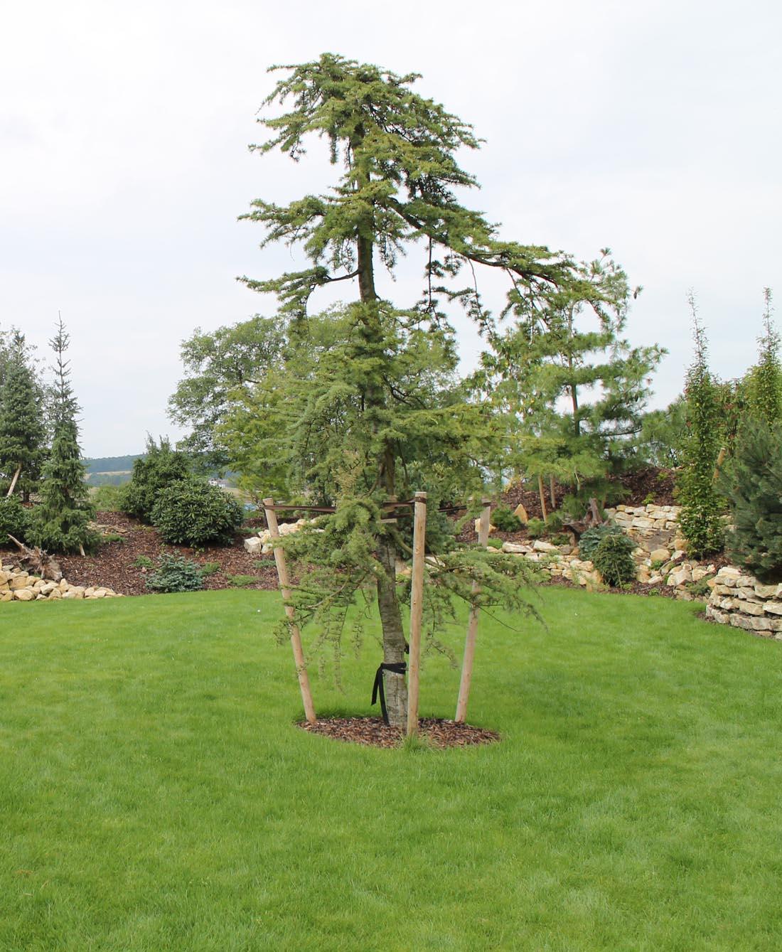 Modern zahrada n zko dr bov kousek p rody pr ma for Jardin de metis 2016