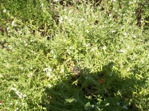 cmelak na bylinkach