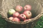 jablka v kosiku