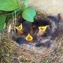 ptaci nahled