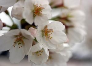 barborka tresen kvety