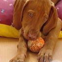 hracka stene pes nahled