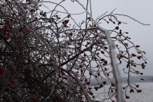 krmeni pro ptaky v zime