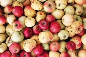padana jablka