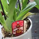 orchideje nakup nahled