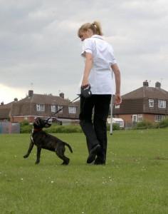 pes chuze na voditku