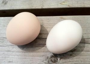 vejce ze dvora