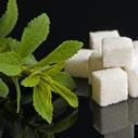 stevie cukr nahled