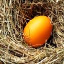 barveni vajec nahled