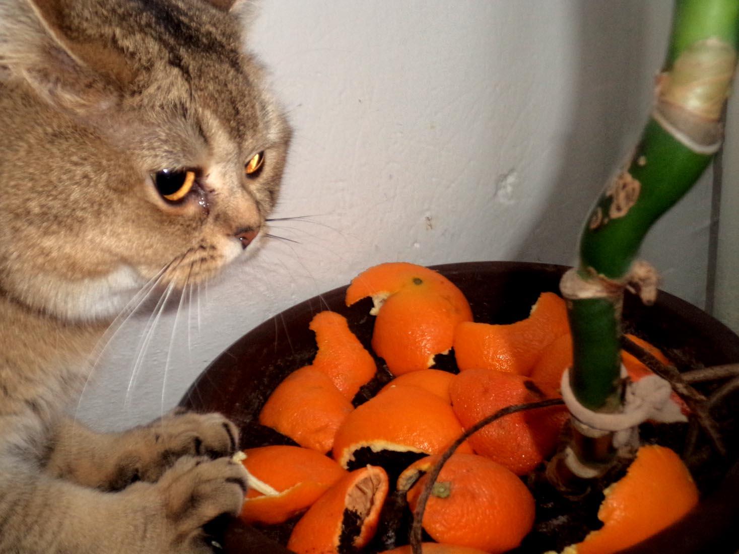 Venkovní dospívající kočička