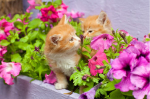 kocka vyhrabava kvetnik