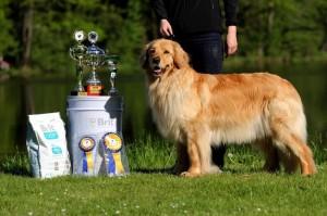 pes vystava vyhra