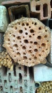 domecek pro hmyz