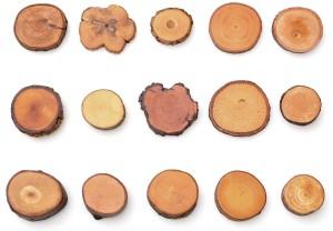 drevo ruzne druhy