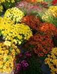 floria podzim