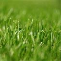 travnik posekany nahled