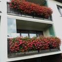 balkonove muskaty nahled