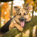 pes priroda nahled