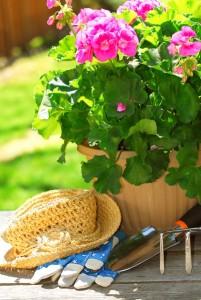 zahrada muskaty sazeni