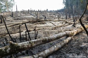 vypalovani pralesa