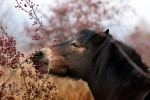 kone milovice