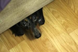 pes smutny pod posteli